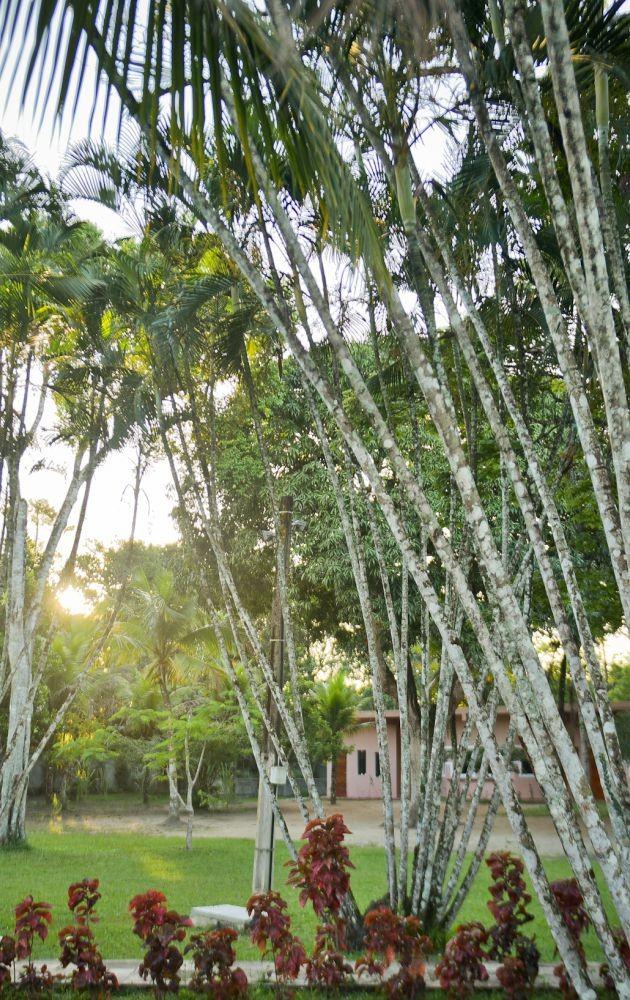 Imagem Jardim Residence Sucupira