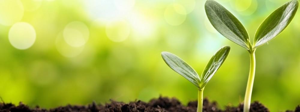 Comprar Fertilizante em PA