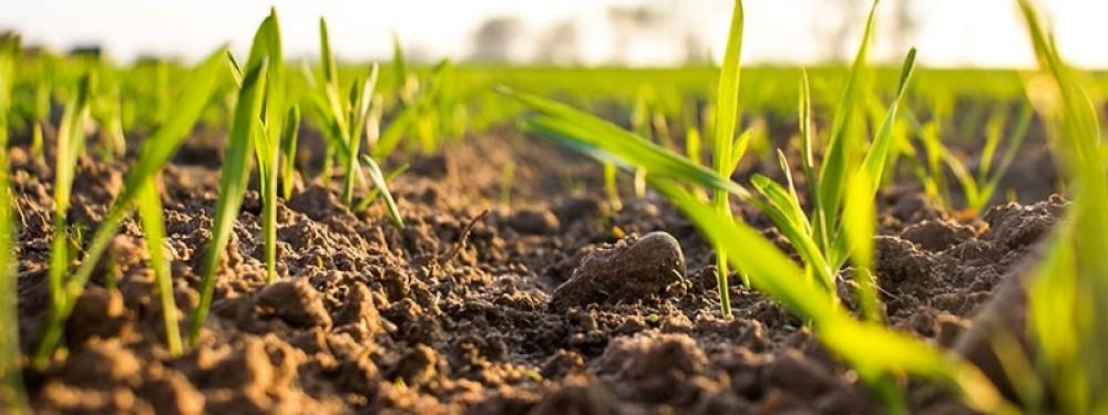 Fertilizante Foliar Para Nutrição Vegetal