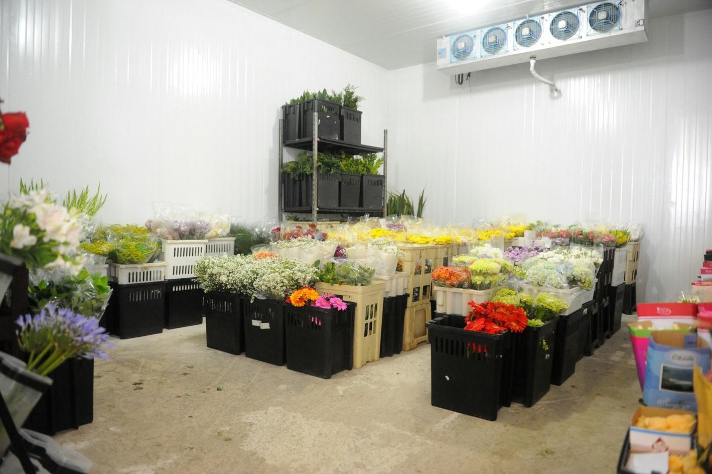 Imagens da Amazon Flores Câmara Fria