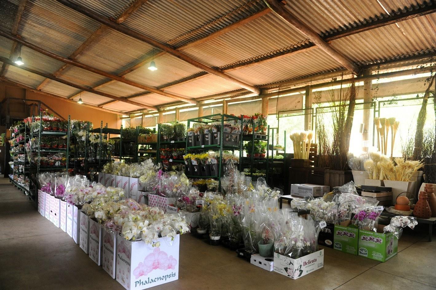Imagem Estoque e Interno Amazon Flores e Plantas