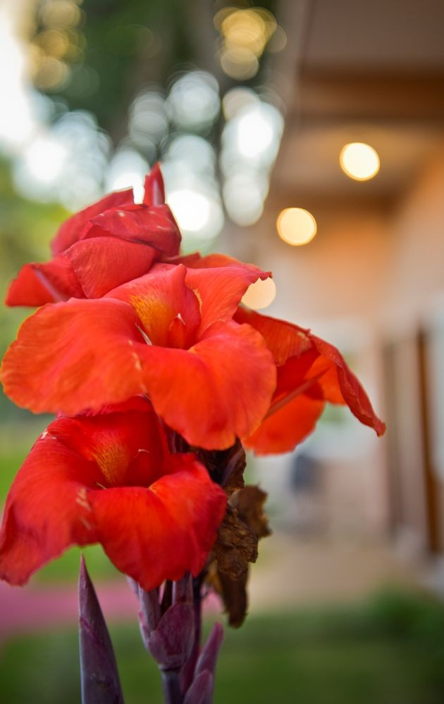 Orquídea Residence Sucupira
